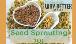 Seed Sprouting 101: The Basics (video)